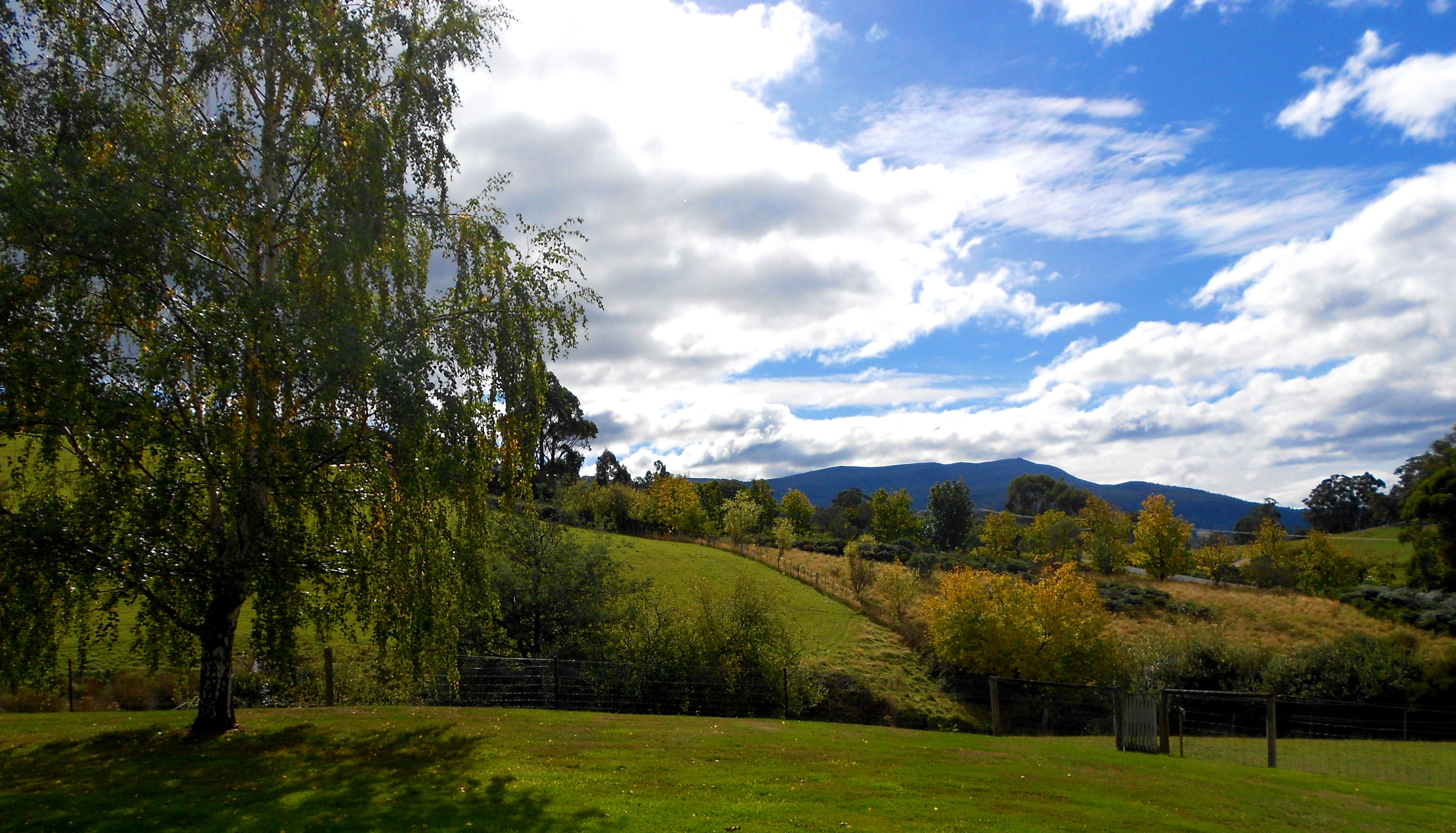 Summer view of Mt Wellington from Birchview Tasmania's front lawn